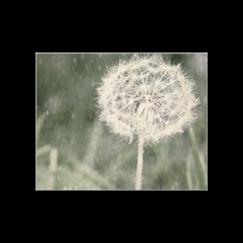 """Glitter Dandelion Poster 20""""x16"""""""