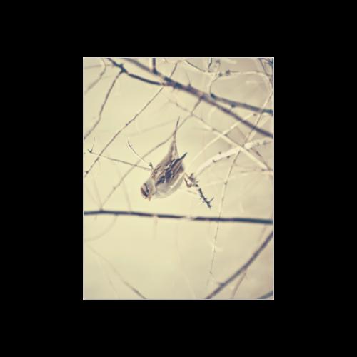 """Sweet Bird Poster 14""""x11"""""""