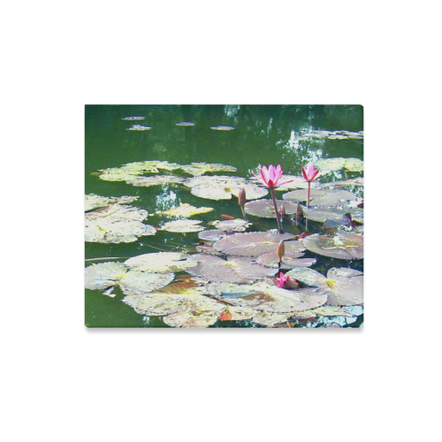"Beauty of Lilies in pond Canvas Print 20""x16"""