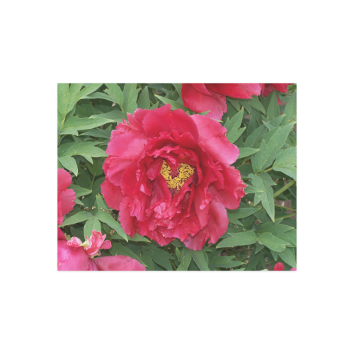 """Peony Heart Poster Poster 14""""x11"""""""