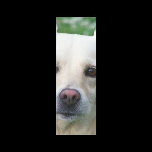 """Dog face close-up Poster 12""""x36"""""""