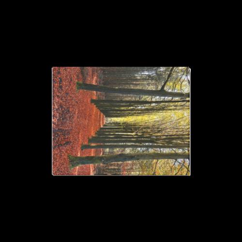 "Autumn Forest Path Canvas Print 11""x14"""