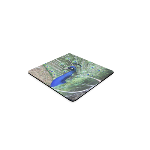 Male Peacock in courtship Square Coaster