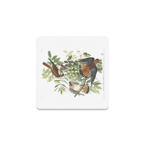 Audubon American Sparrow Hawk Birds of America Square Coaster
