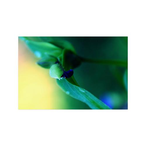 "FLOWER © Pimpinella Art Poster 20""x30"""