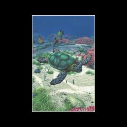 "Sea Turtle Poster 11""x17"""