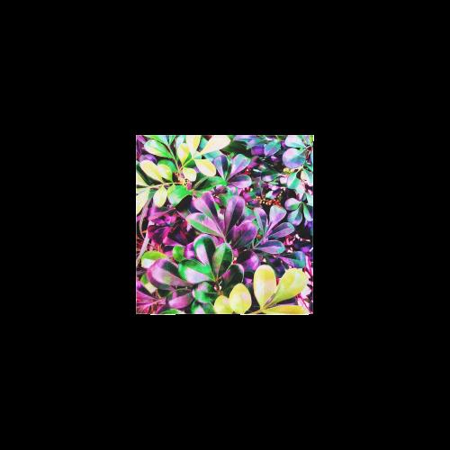 "Foliage-3 Square Towel 13""x13"""