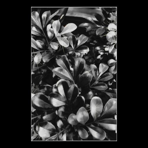 "Foliage-1 Poster 23""x36"""