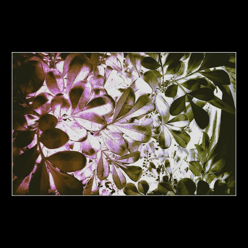 "Foliage-4 Poster 23""x36"""