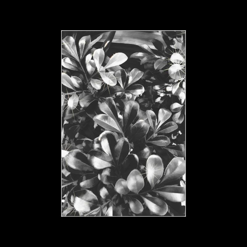 "Foliage-1 Poster 20""x30"""