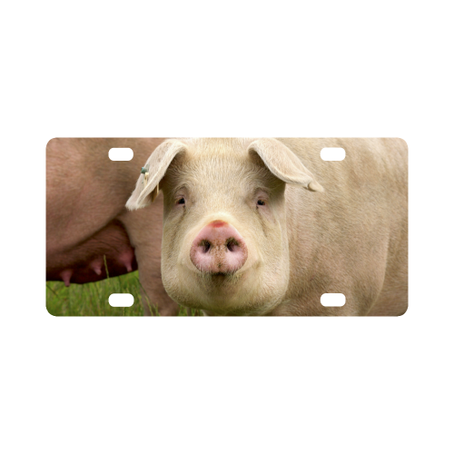 Pigs Mama Animals Farm Classic License Plate