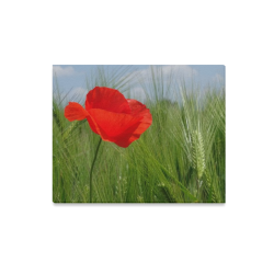 "Poppy In The Wind Canvas Print 20""x16"""