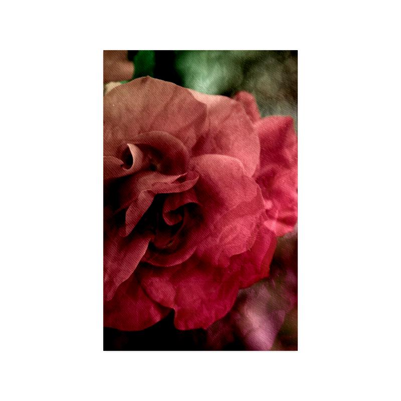 "Rose Poster 11""x17"""