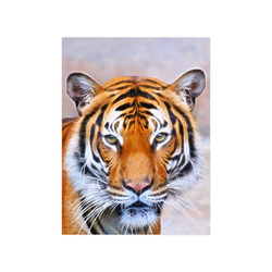 "Animal ArtStudio 916 Tiger Poster 18""x24"""