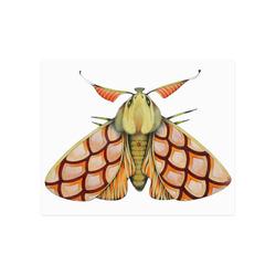 "Pink moth Poster 20""x16"""