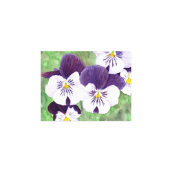 """Purple and white pansies flowers Poster 11""""x8.5"""""""