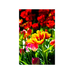 """Tulip Flower Colorful Beautiful Spring Floral Poster 11""""x17"""""""