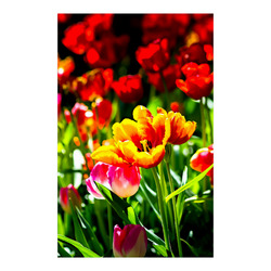 """Tulip Flower Colorful Beautiful Spring Floral Poster 23""""x36"""""""