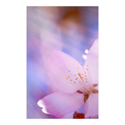 "Sakura Cherry Blossom Spring Heaven Light Pink Poster 23""x36"""
