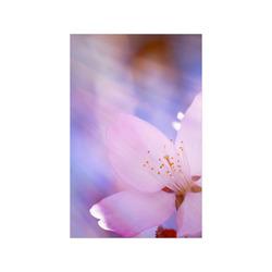 "Sakura Cherry Blossom Spring Heaven Light Pink Poster 11""x17"""